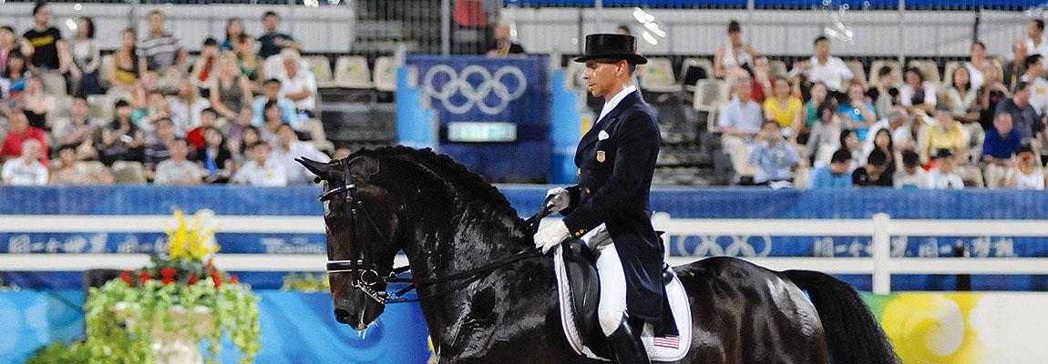Tim Coomans Dutch Sporthorses - Quality Dressage Horses